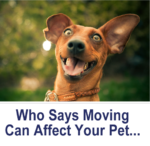 Does Moving to a New Home Affect your Pets?