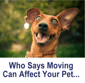 Who Says Moving Can Affect Your Pet..