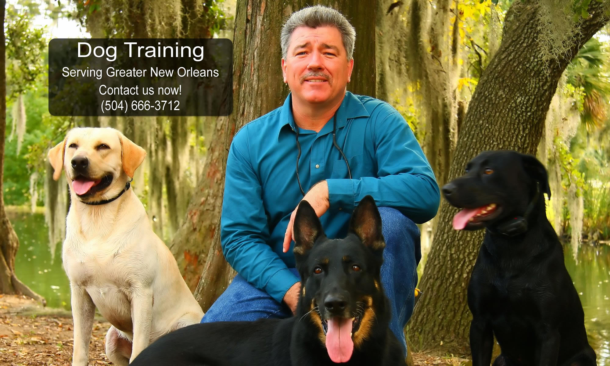 In Control Dog Training